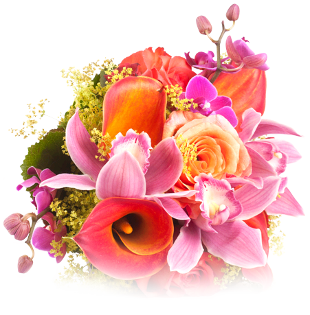 Real Flowers Png انتهت المسا�...